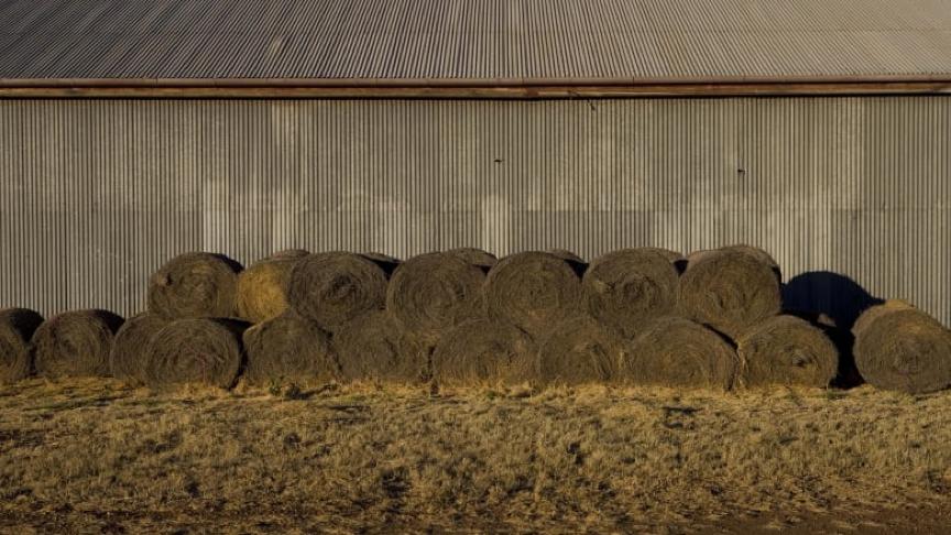 中国富豪欲收购澳洲最富有养牛场,与欧美买家展开竞争