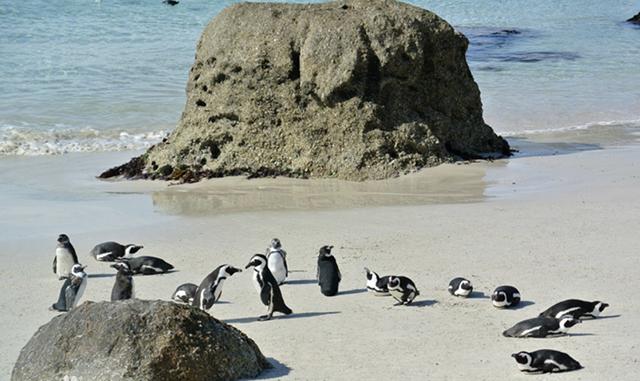 澳企鹅岛花费5800万升级游客中心,旨在吸引更多游客参观企鹅归巢