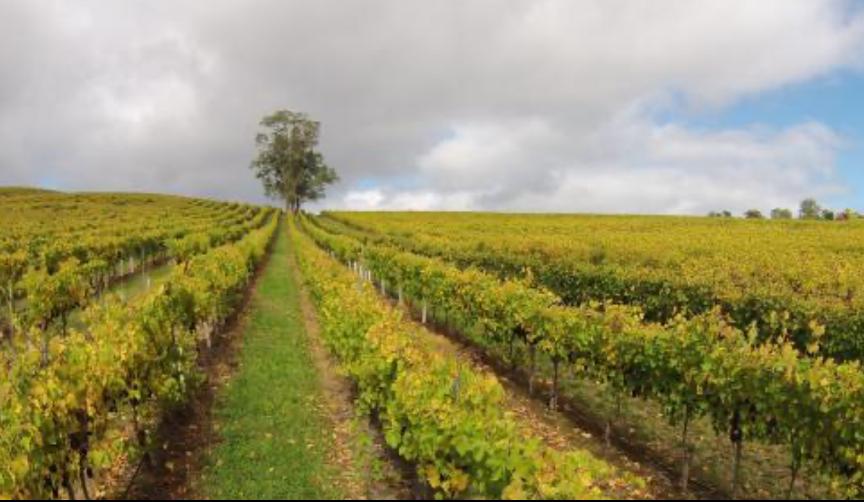 澳媒公布南澳农场老板名单,香港首富李嘉诚坐拥南澳7个葡萄园